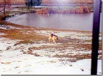 Heide1994