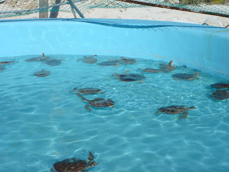 Turtles in Mexico