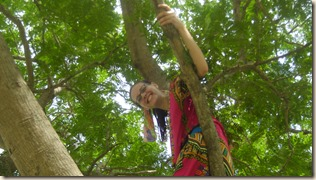 aurelia in tree 1