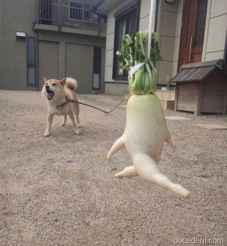 legumes e formas8