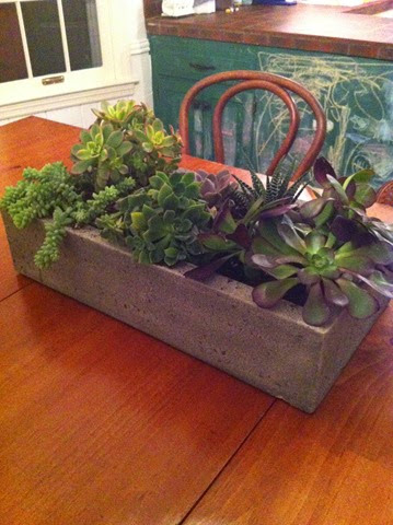 succulents in concrete planter