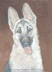 This is Senta, Delia's beloved German shepherd from years ago.