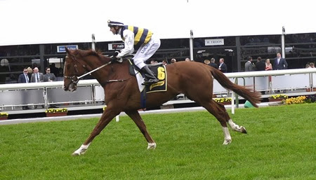 race 8 _blackie