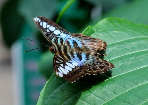 2013-07-05 butterfly pavilion (108)