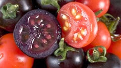 purple-tomatoes