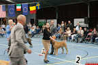 20130510-Bullmastiff-Worldcup-0915.jpg