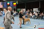 20130510-Bullmastiff-Worldcup-0915.jpg