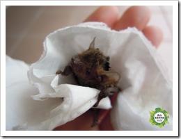 20120315員山生態教育館-蝙蝠收容