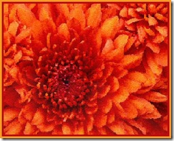 BIG ORANGE FLOWERS RS1
