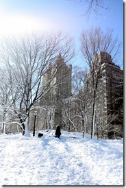 snow-central-park-west-nyc