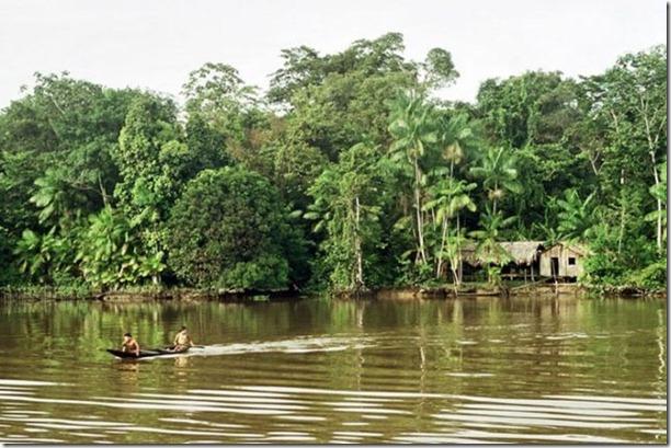 beautiful-amazon-rain-forest-30