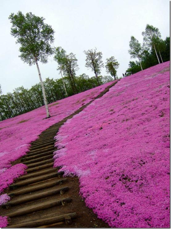 pink-park-japan-22