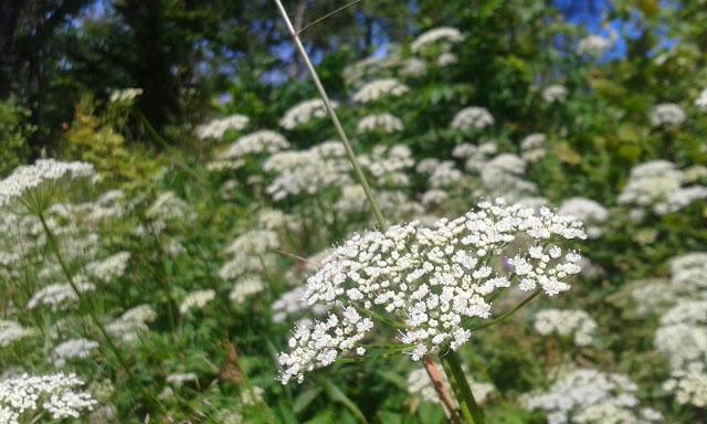 Sösdala, blommor, Fredriksberg