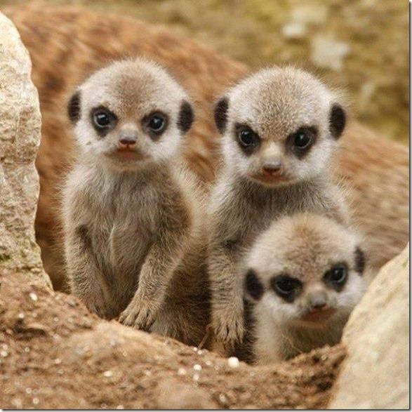 funny-animals-cute-32