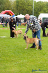 20100513-Bullmastiff-Clubmatch_30937.jpg