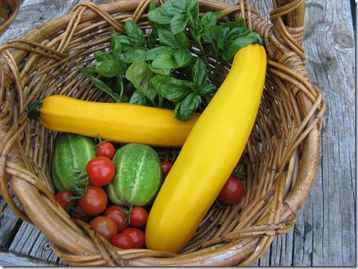 Yellow Zucchini-6