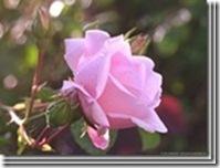 clip_image07152