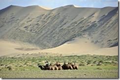 07-14 khongor 109 800X dune