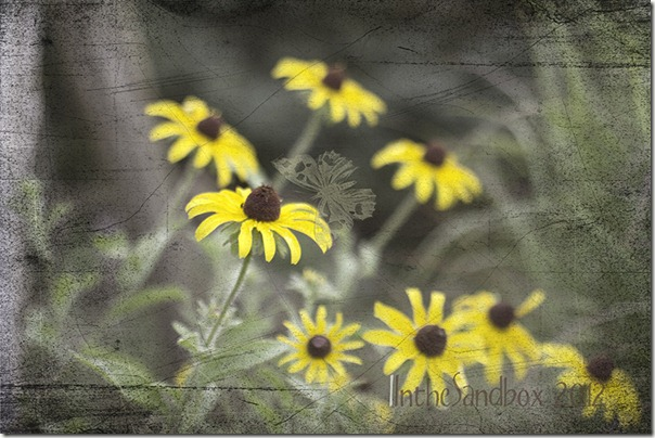 Textured black eye susans