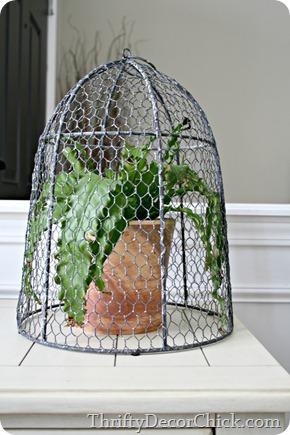 Plant under wire cloche
