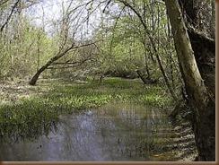 Old_Creek_Run-_Tuscalameta_Creek