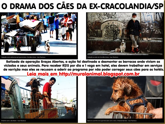 caes_cracolandia2