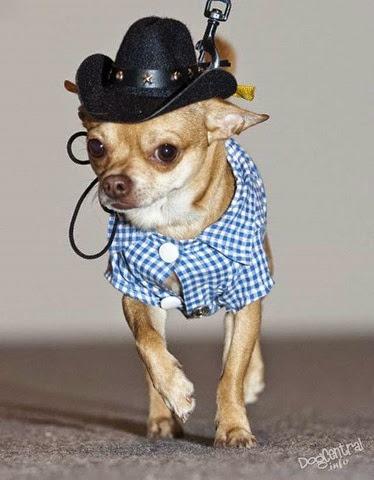 Собака в костюме ковбоя