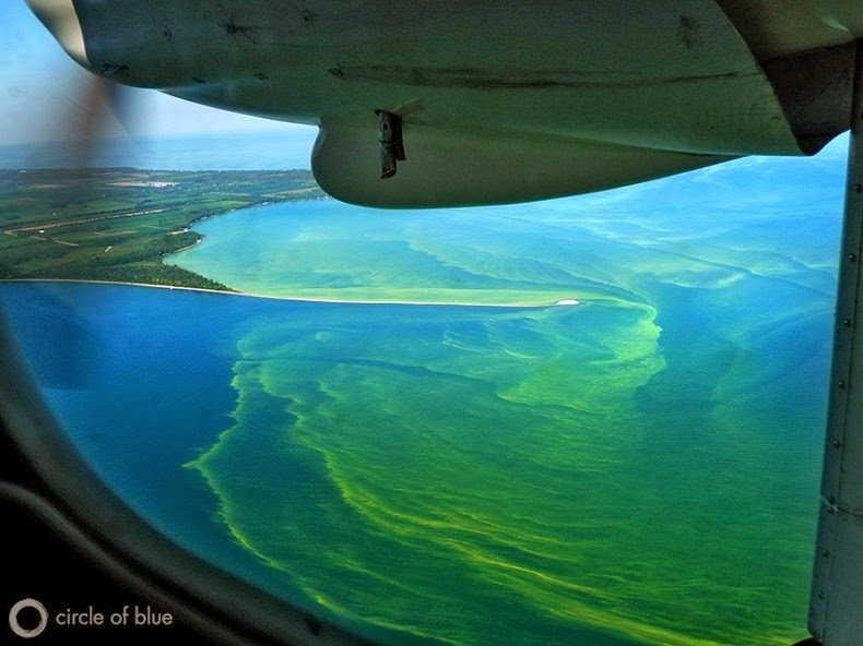 lake-erie-algae-9