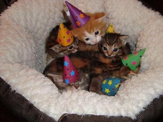 Kitten Approved
