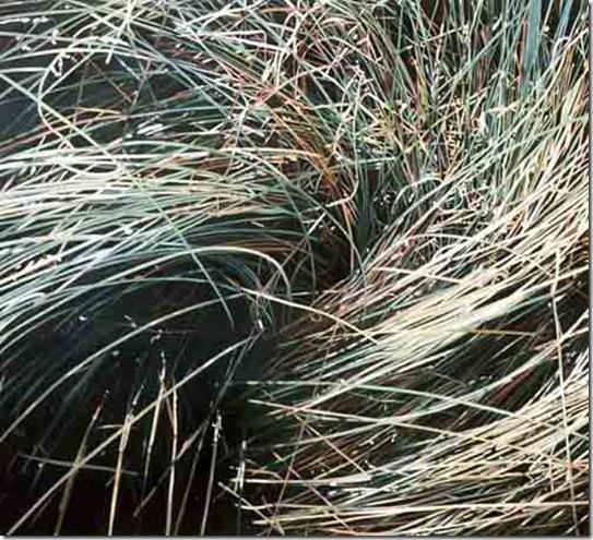 herbes V