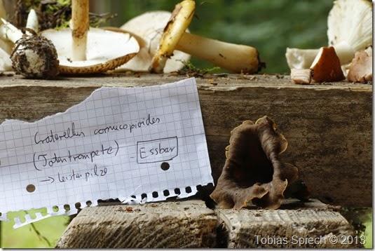 Craterellus cornucpoipides