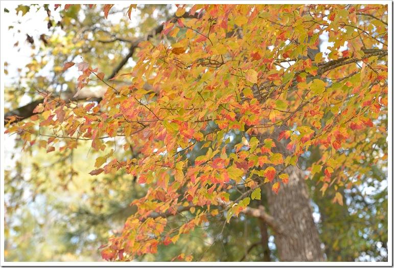 leaves 012 fb