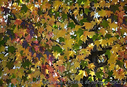 12  Glória Ishizaka - Folhas de Outono 2013