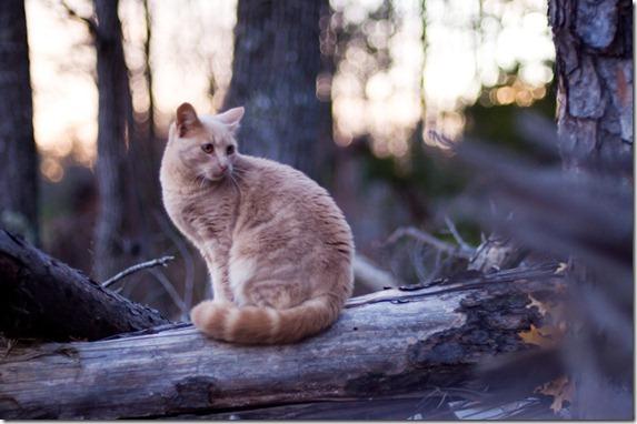 cat12-178