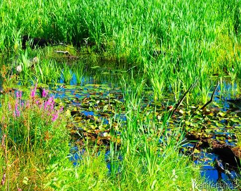 8. waterlilies-kab