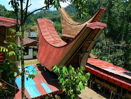 Tana Toraja: the ceremony