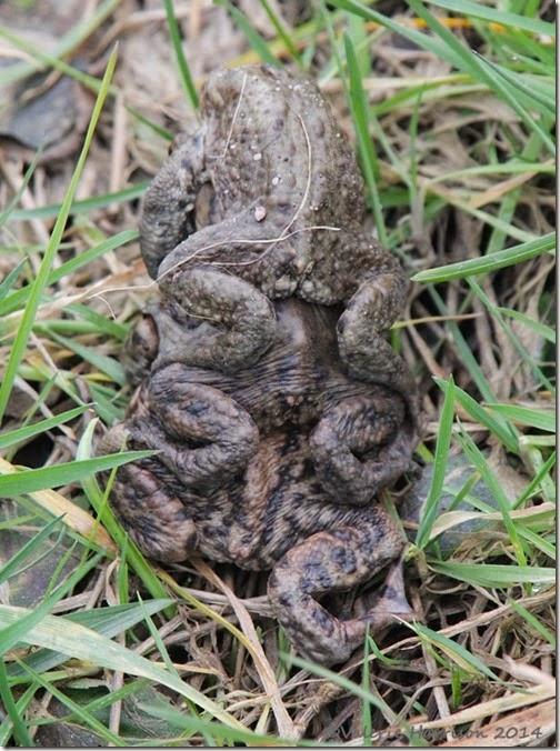 110-toads