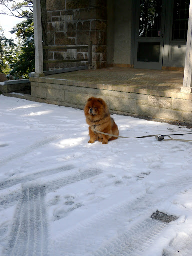 Francesca!  G.K. loves the snow and he's been tied up to the porch all morning!  Let's take him for a walk!
