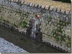 Halmaal, Maasrode: geen riolering?