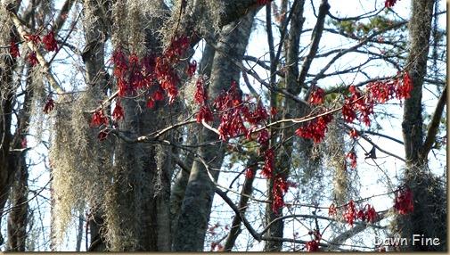 Magnolia Plantation_489