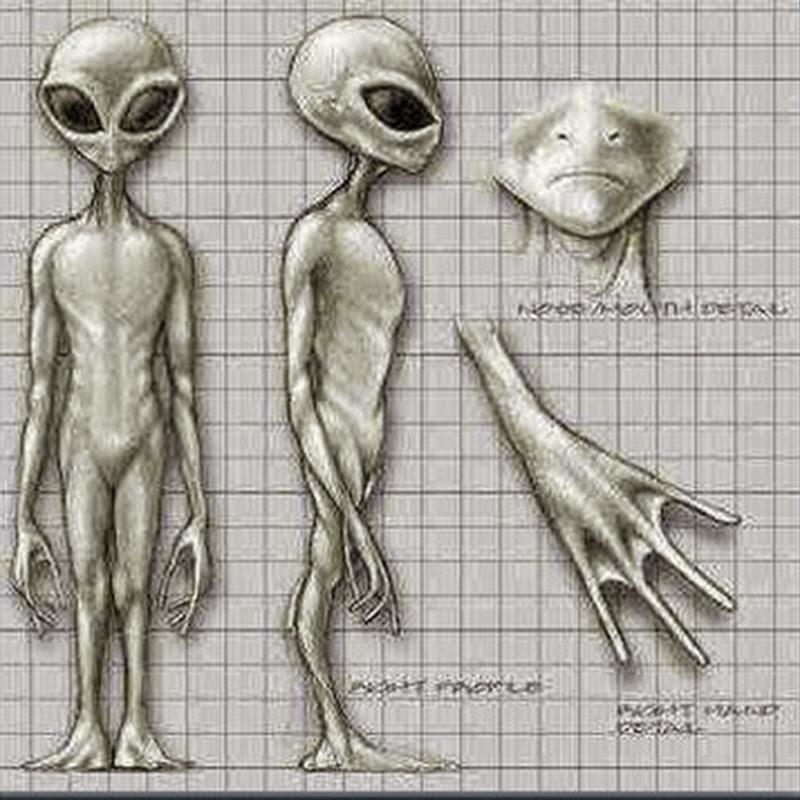 Alienígenas Greys