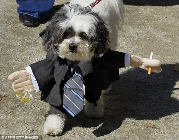 Jack the dog as Don Draper from Mad Men - not to be confused with a banker