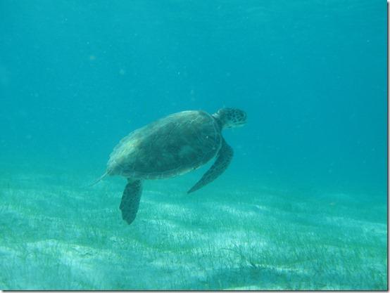Tobago Cays 012