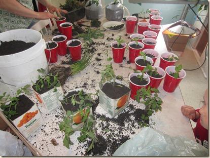 potting plants 057