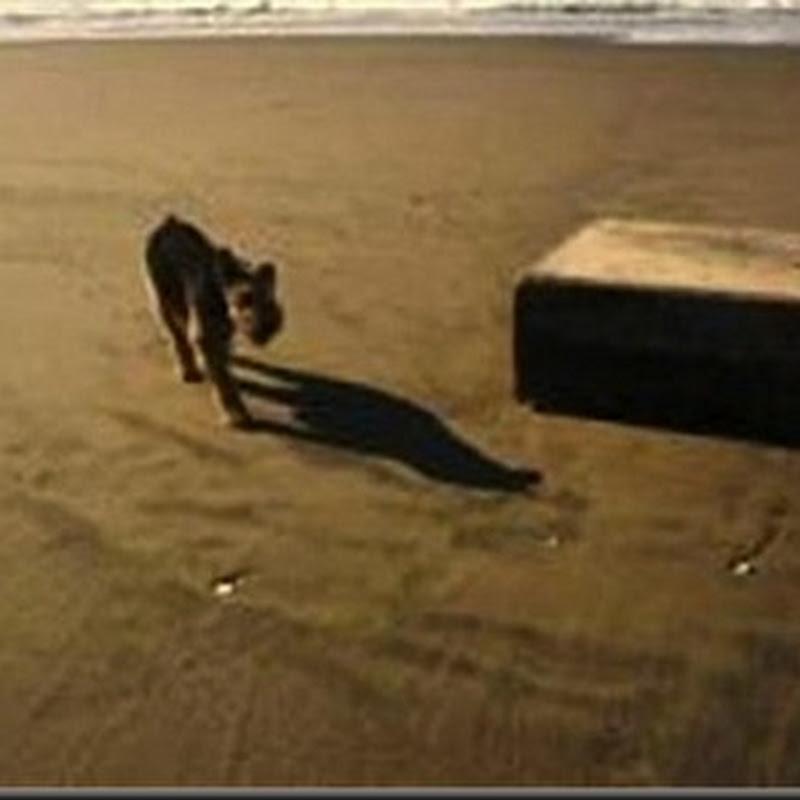 Misteriosas Caixas de Metais estão aparecendo nas Praias