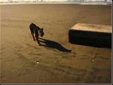 Strange, odd, box, boxes, metal, beach, beaches, found, UFO, UFOs, sigting, sightings, alien, aliens, ET, 2012, feb, february, news, top secret, invasion, HAARP, disclosure, Anonbox-500x375