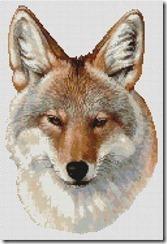 coyoteportrait