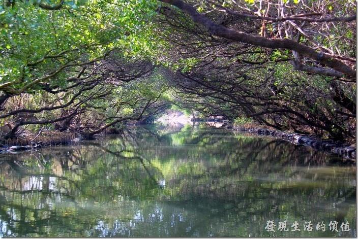 台南-四草竹筏綠色隧道18