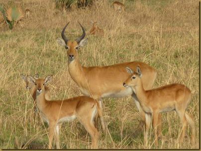 Ziwa, Murchison Falls trip 183