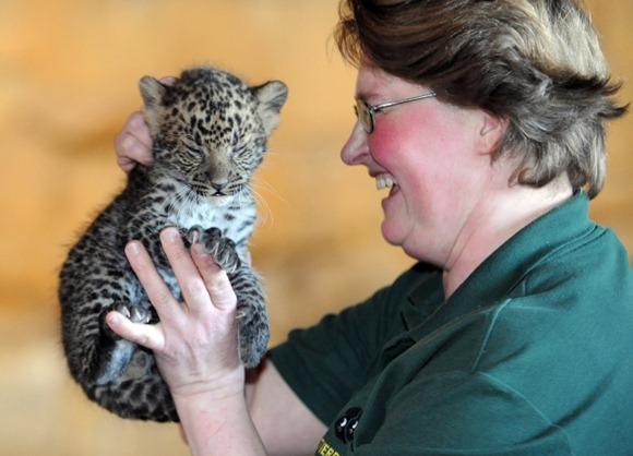 leopard-britta-pedersen_orig